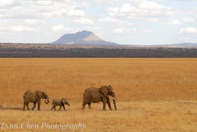 Tarangire: elephant paradise