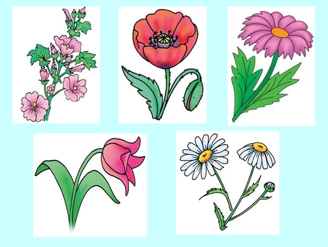 фото квітів малюнки