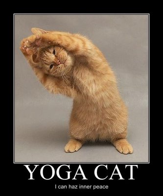 FUNNY YOGA CATS - LOL CATS PICTURES   FUNNY INDIAN ...
