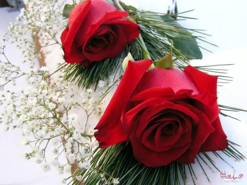 صورة وردة حلوة جميلة 6