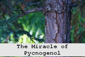 https://foreverhealthy.blogspot.com/2012/04/pycnogenol-miracle-anti-aging.html
