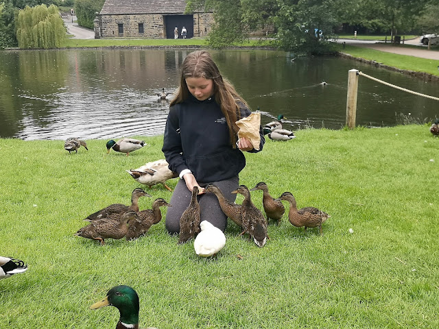 Tween girls feeding ducks