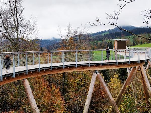 Sortie en Famille :  Le Sentier de la canopée du Neckertal // SUISSE