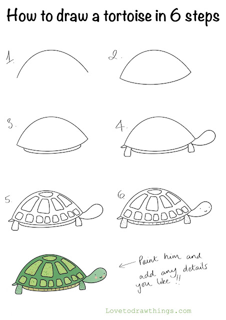 How to draw a tortoise in 6 steps