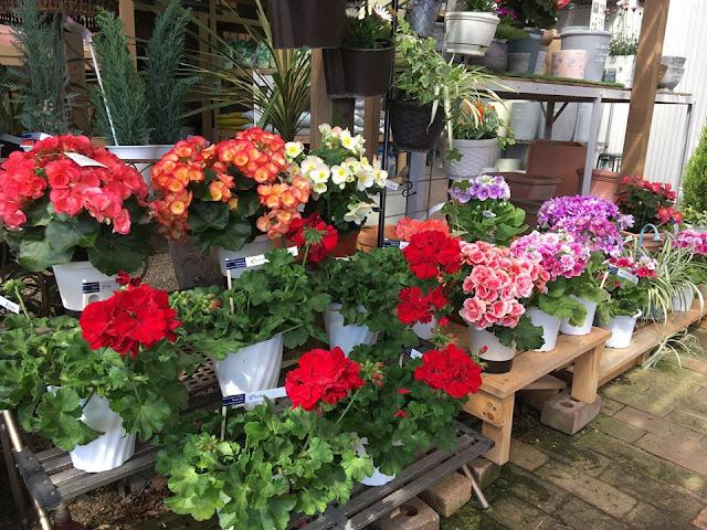 春のお花もたくさん入荷しています