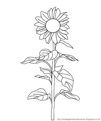 Gambar Mewarnai Bunga Matahari (3)