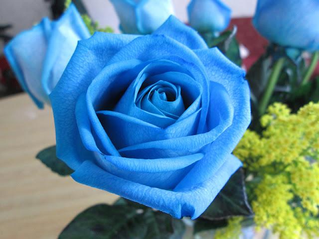 Ý nghĩa hoa hồng xanh trong tình yêu