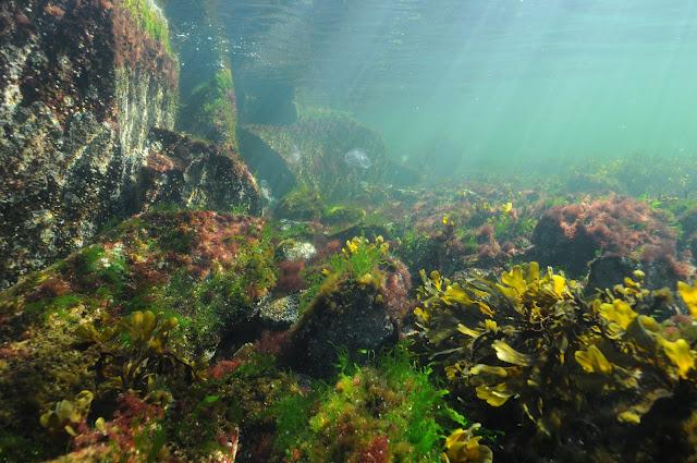 Vedenalainen merenpohja, jossa on kalliota ja isoja kiviä, joiden päällä kasvaa erivärisiä leviä. Välivedessä ui myös korvameduusa.