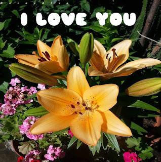 i love you images rose