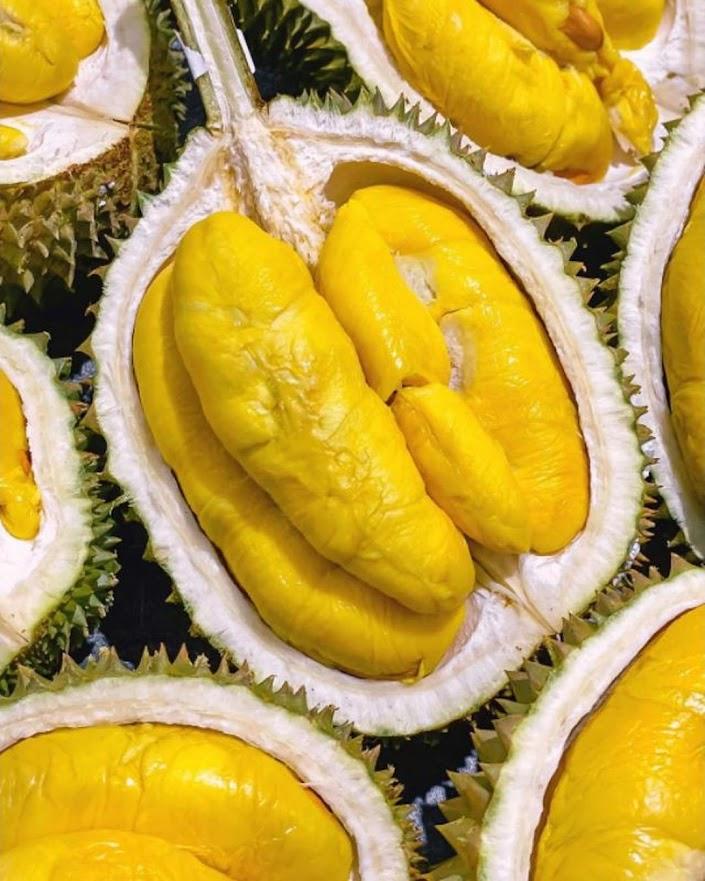 Bibit durian musangking okulasi genjah cepat berbuah Bau-Bau