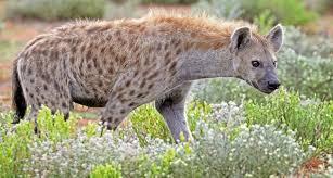 दुनिया में शीर्ष 10 सबसे खतरनाक जानवर(Most Dangerous Animals In The World)