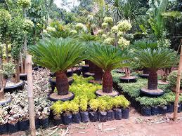 tukang tanaman