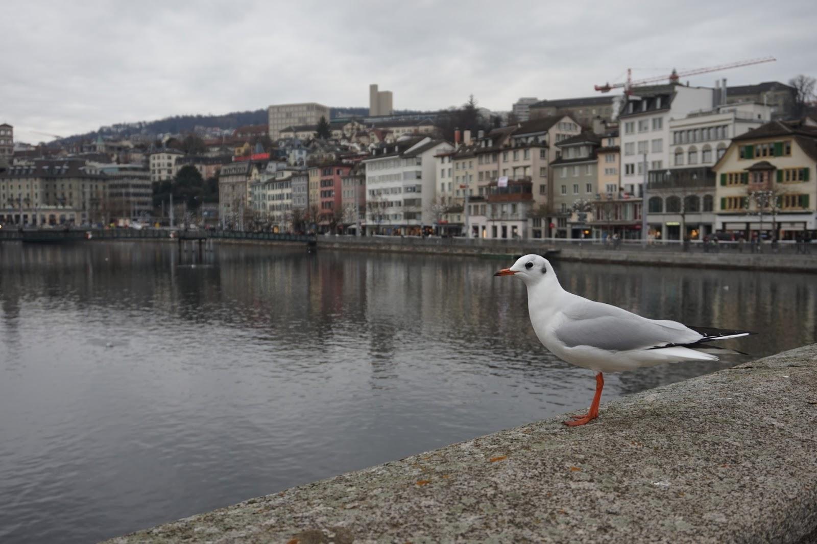 Sveitsin Frangin Kurssi