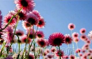 Mimpi Bunga