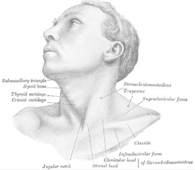 Penyakit tortikolis adalah sebuah kelainan postur pada leher manusia. Kondisi ini akan sangat mempengaruhi keadaan dari penderitanya, sehingga aktivitas keseharian yang akan dilakukan oleh penderita kondisi ini akan terganggu akibat efek yang diberikan oleh kondisi ini.  Kelainan ini biasanya terjadi pada saat proses kelahiran, yang mungkin tanpa disengaja adanya penarikan pada bagian leher pada bayi yang sehingga merusak jaringan otot pada leher dan rahang bantalan pada leher. Untuk mengetahui lebih lanjut dalam bahasan penyakit tortikolis pada leher manusia, silahkan di simak dan baca dengan yang telah tersaji di bawah ini.      Penyakit Tortikolis Pada Leher Manusia  Tortikolis merupakan sebuah kondisi yang mempengaruhi keadaan dari leher manusia. Hal ini bisa terjadi dikarenakan oleh beberapa hal yang tentunya akan di bahas di dalam artikel ini. Kondisi ini akan sangat mempengaruhi keadaan dari seseorang yang mengalami hal ini, sebagai contoh adanya ketidaknyaman pada saat menggerakan kepala karena adanya keterbatasi rotasi sendi leher.  Maka dari itu penting untuk mengetahui dan mengenali kondisi ini, untuk mengetahui lebih lanjut dalam bahasan penyakit ini silahkan simak dan ikuti dengan sebagai berikut :  1. Pengertian Tortikolis  Tortikolis adalah suatu gangguan pada otot leher yang mengakibatkan kepala terlihat memutar ke arah samping (Macias, 2013). Tortikolis adalah kelainan pada struktur jaringan lunak pada satu sisi leher, berupa sidefleksi, homolateral & rotasi heterolateral (Freed, 2013).  2. Etiologi Tortikolis  Etiologi dari kondisi ini adalah sebagai berikut ini : Lahir sungsang atau lahir sulit pada bayi Pada tortikolis kongenital adanya patah tulang dan efek samping obat-obatan  3. Faktor Risiko Tortikolis  Faktor risiko dari kondisi ini adalah sebagai berikut : Kerusakan otot leher, radang bantalan tulang Trauma  4. Manifestasi Klinis Torikolis  Manifestasi klinis dari kondisi ini adalah sebagai berikut : Terbatasnya otot arah kepala, sakit pada