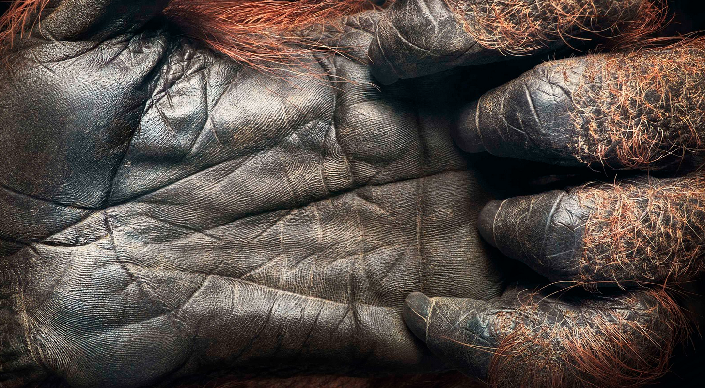 Tim Flach Photography Hand
