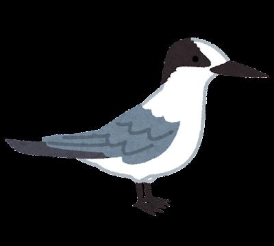 コアジサシのイラスト(冬羽)