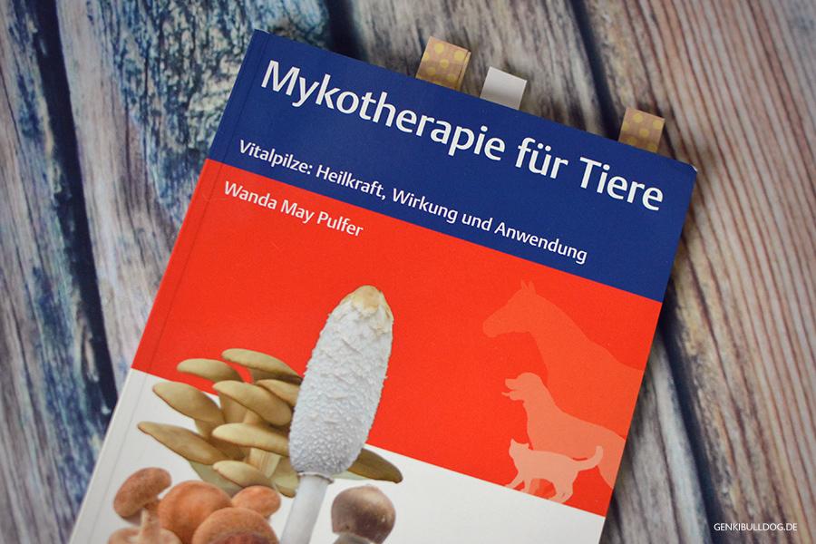 Französische Bulldogge Hund Juckreiz Allergie Mykotherapie