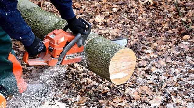 jasa-tebang-pohon-cepat-dan-murah