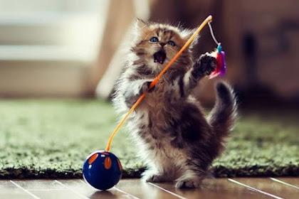 Mainan Kucing Untuk Membuat Kucing Anda Lebih Bersemangat