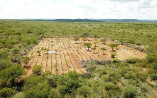 Polícia Civil erradica plantação de maconha avaliada em R$ 32 milhões na Bahia