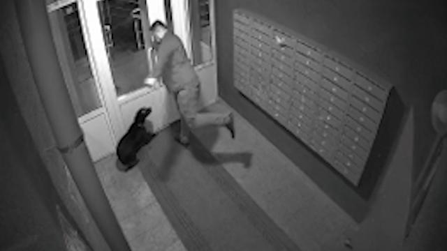 Избил за недержание и выгнал на улицу: в Саранске зоозащитники забрали больного пса у хозяина-живодёра
