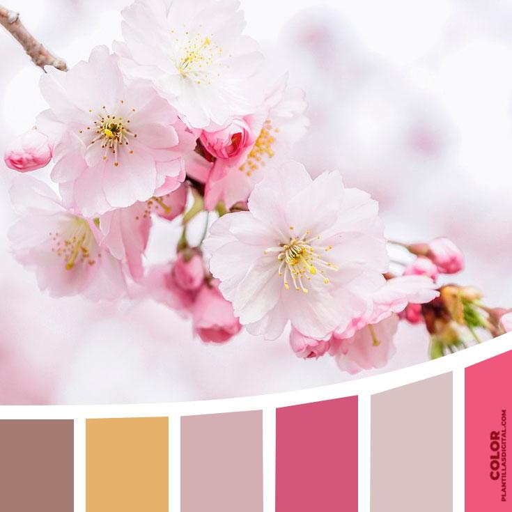 color_595