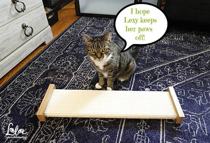 Tabby Cat with Bootsie's Combination Scratcher