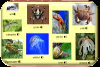 http://www.learningchocolate.com/en-gb/content/invertebrates?st_lang=en