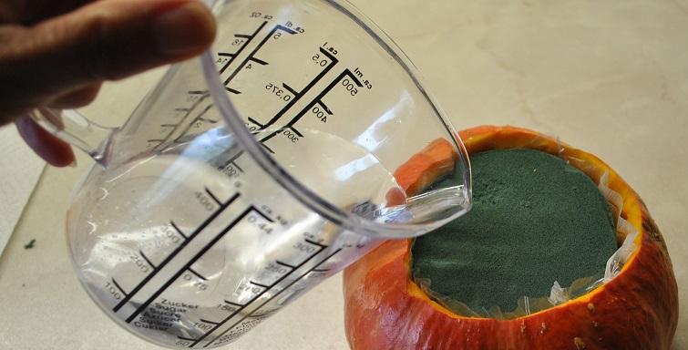 Kürbisvase mit Wasser befüllen