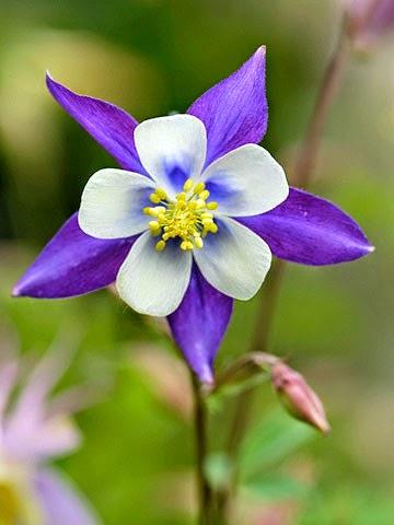 Bellas Flores Naturales