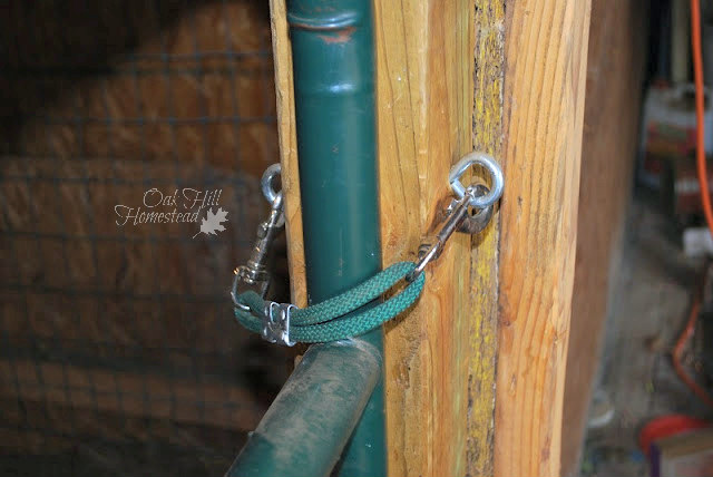 These homemade tie straps work great to hold the goats' big gate shut.