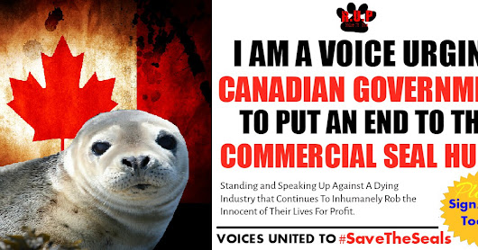 THINGS YOU CAN DO TO HELP END THE CANADA COMMERCIAL SEAL HUNT #SAVETHESEALS