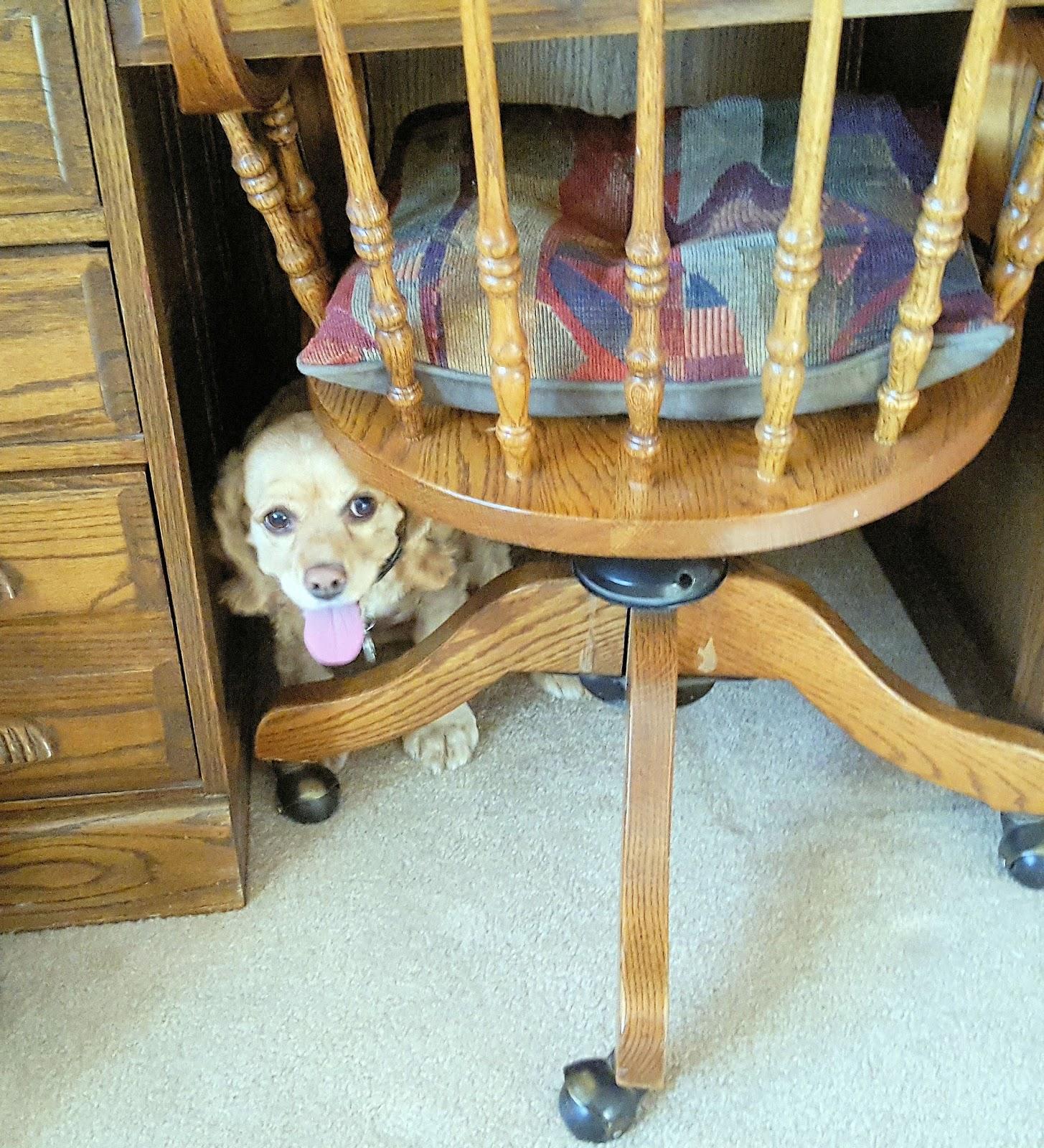 Dog Hiding Food Dying