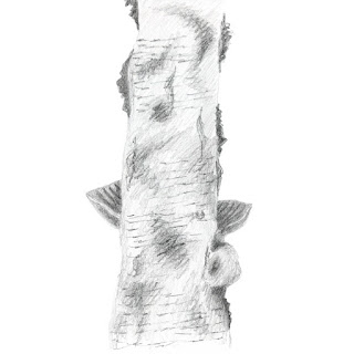 Birch tree trunk pencil drawing