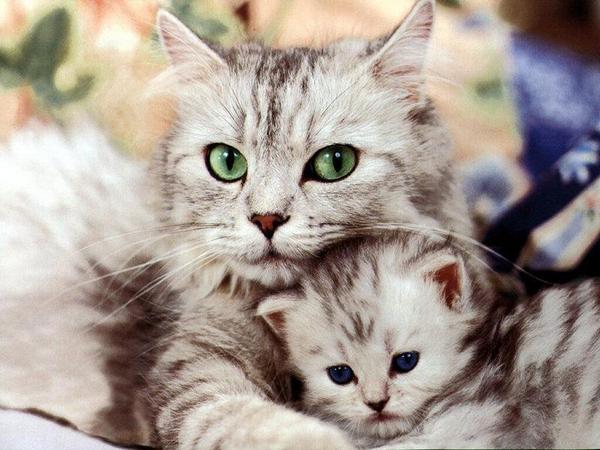 imágenes de amor mama gata con su gatito