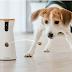Κάμερες, κονκάρδες, κολλάρα και σπίτι κατά του άγχους: Η τεχνολογία στην υπηρεσία του σκύλου