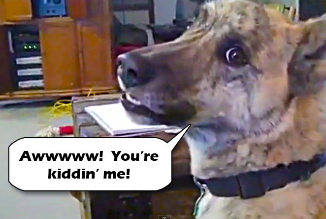 """Awesome Stuff: VERY Funny """"Talking"""" Dog Video: Ultimate ..."""