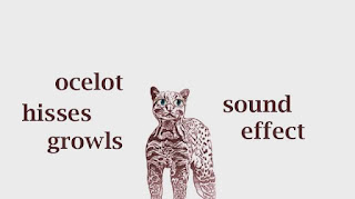 animal ocelot sounds