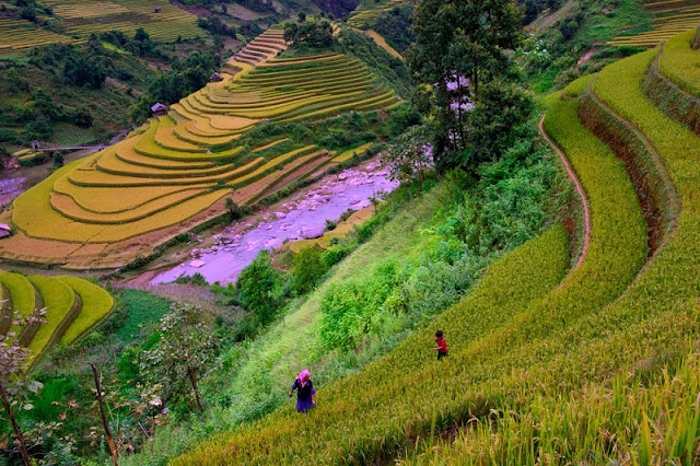 Terrced Fields In Mu Cang Chai in the Tourist eyes 2