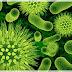 La guerra de las bacterias