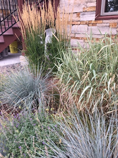 Growing Ornamental Grasses at Altitude