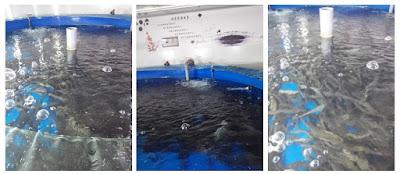 High Density Indoor Aquaculture System