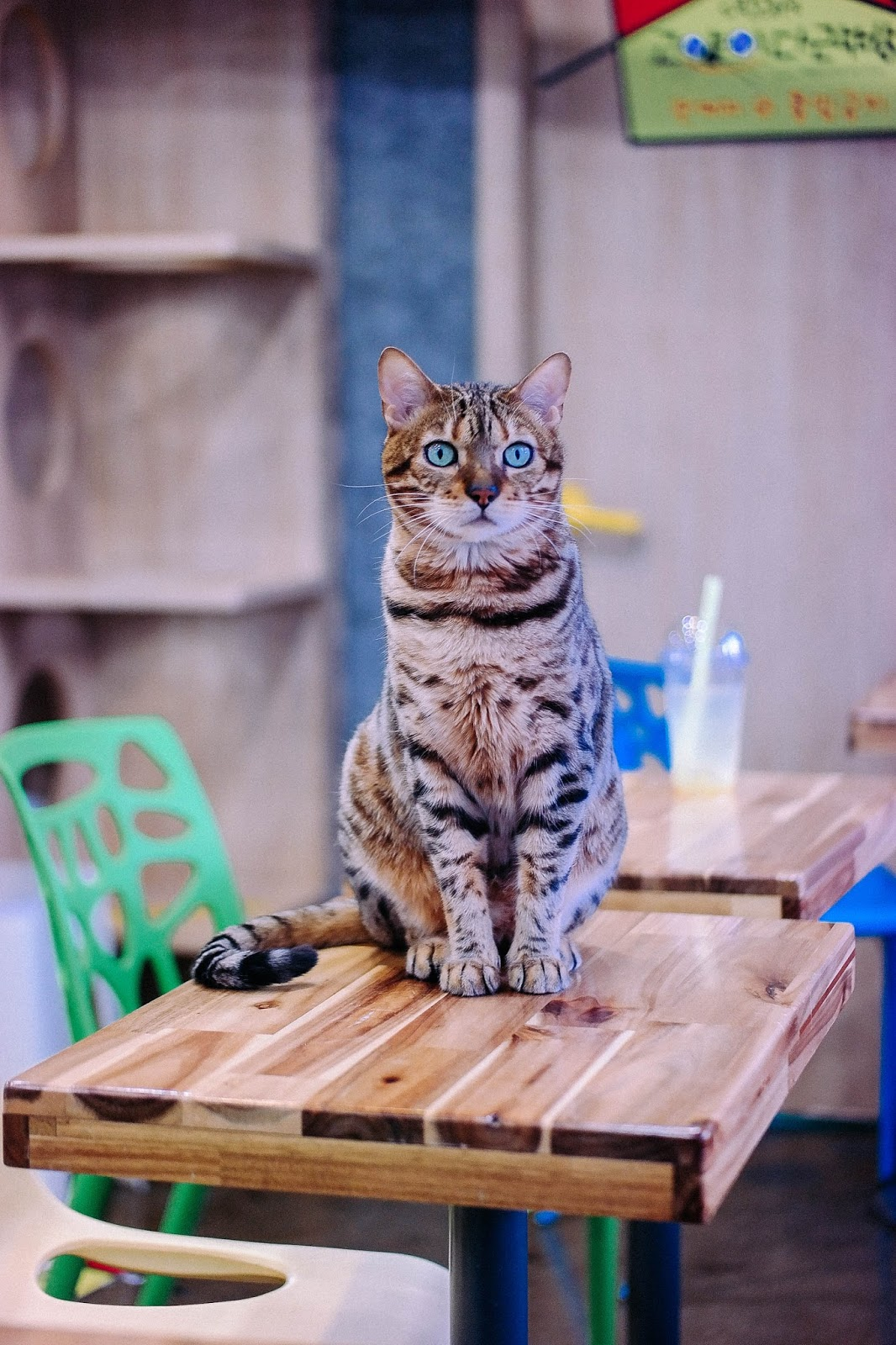 Attic Cat Godabang Cat Cafe in Myeongdong Seoul