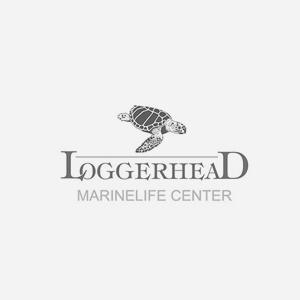 Loggerhead-Marinelife-Center.png
