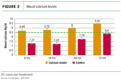 Calcium deficiency in dairy cow