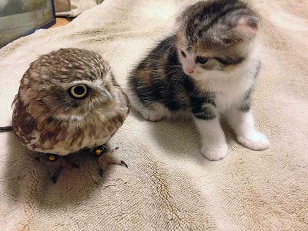 omorfos-kosmos.gr - Ένα γατάκι και μια κουκουβάγια έχουν γίνει οι καλύτεροι φίλοι (Εικόνες)