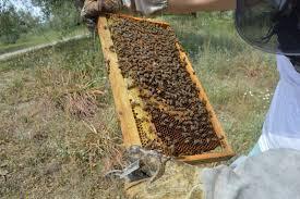 Προφυλάξεις κατά τις επιθεωρήσεις για νέους Μελισσοκόμους