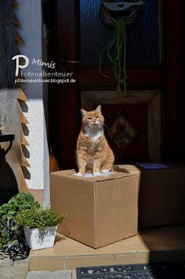 Katze Mimi thront auf zwei Paketen