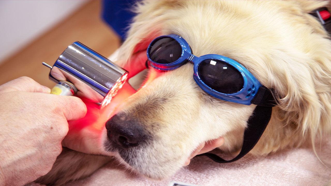 Phenobarbital For Dogs